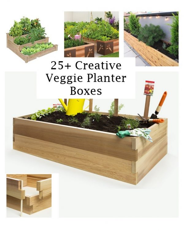 click the images for more details about veggie planter boxes medium