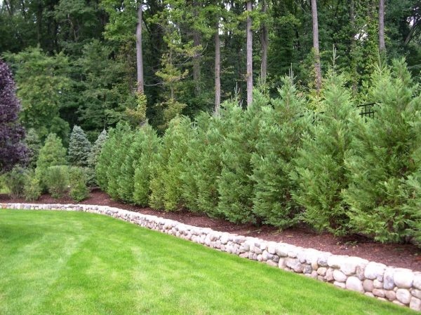 Inspiration Best Trees And Plants For Privacytruesdale Landscaping Medium