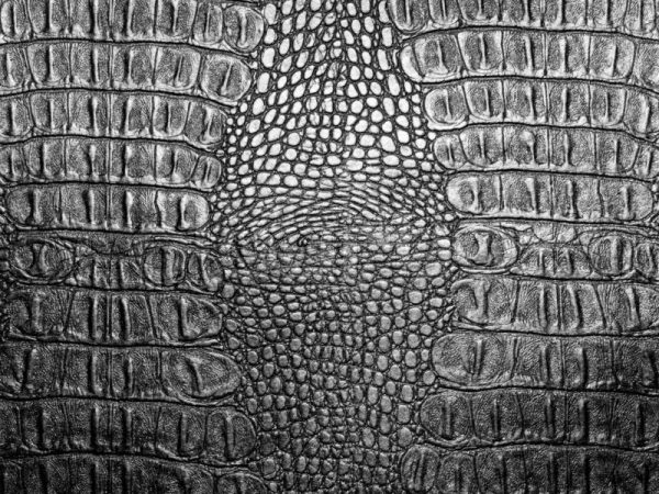 Best Black Crocodile Leather Texture Closeup Background Medium
