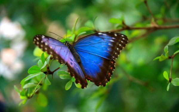 Best Butterfly Wallpaper  Shinecamera Medium