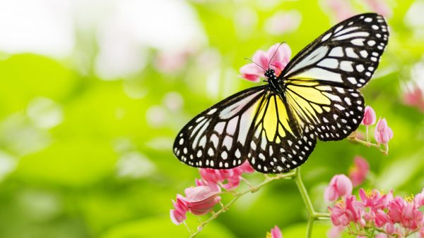 Best Pictures Of Flowers And Butterflies In Hd For Desktop Medium