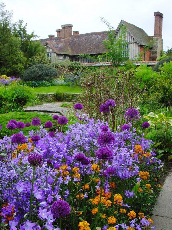 Best Purple Campanula  Bell Flower  For Cottage Garden  Start Medium