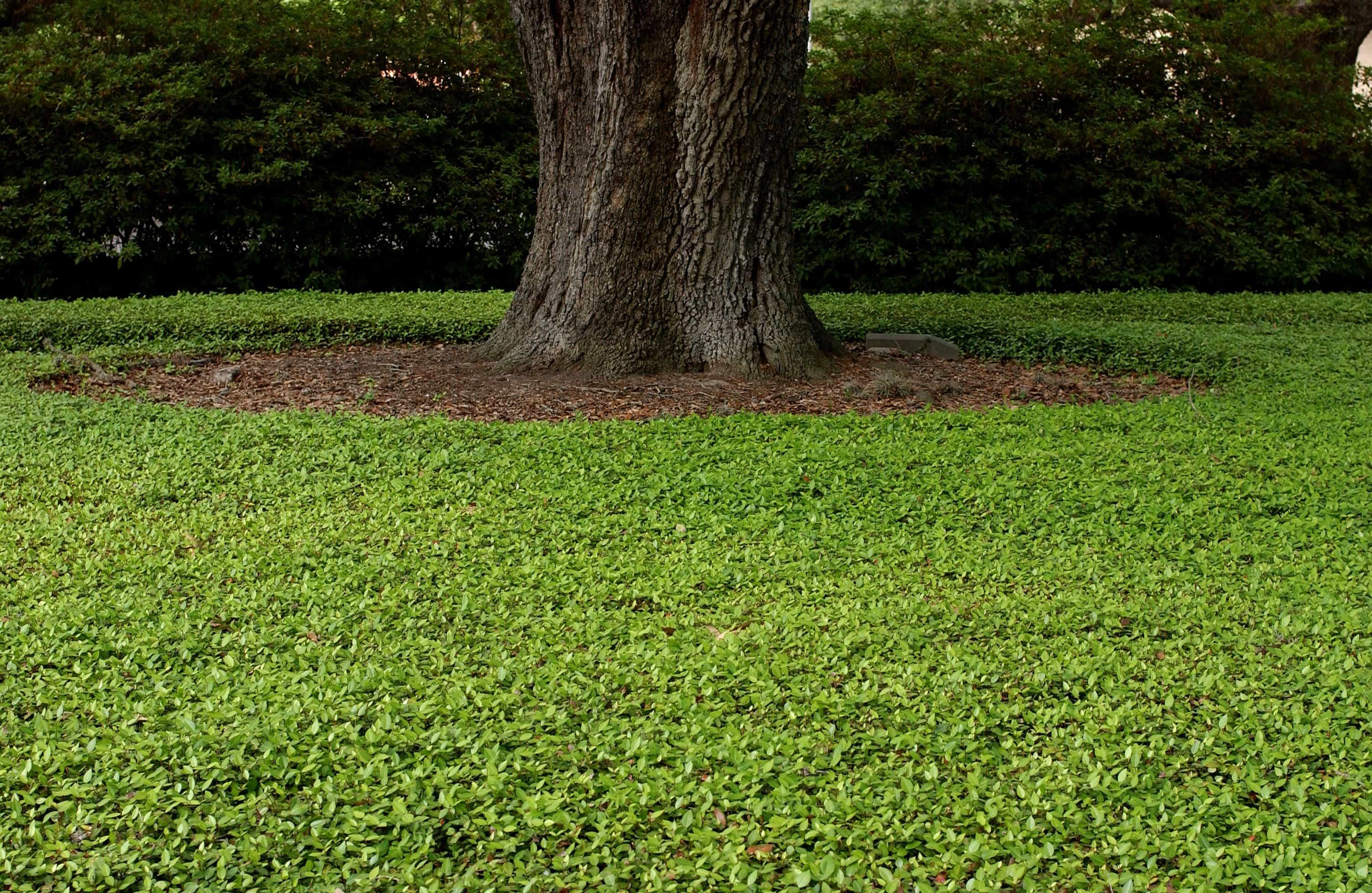 bore ground cover turf grass outdoor plants ground cover