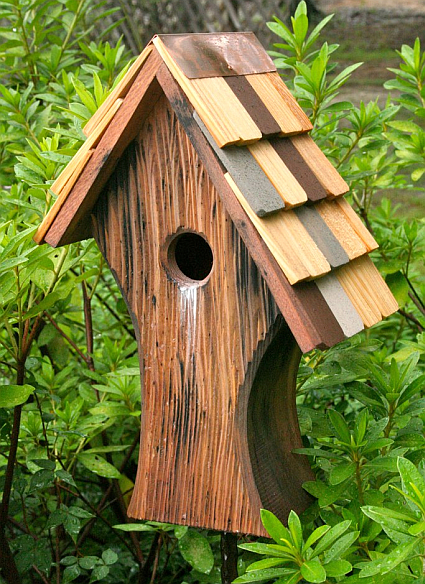 Browse Best Photos Of Unique Bird House Plans Unusual Bird Medium