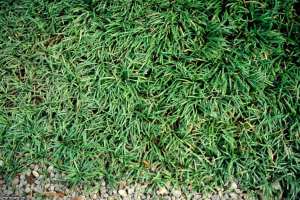 Browse Replace Your Lawn With These Groundcovershgtv