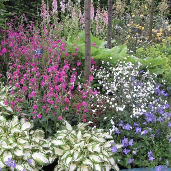 Clever 17 Best Ideas About Cottage Garden Plants On Medium