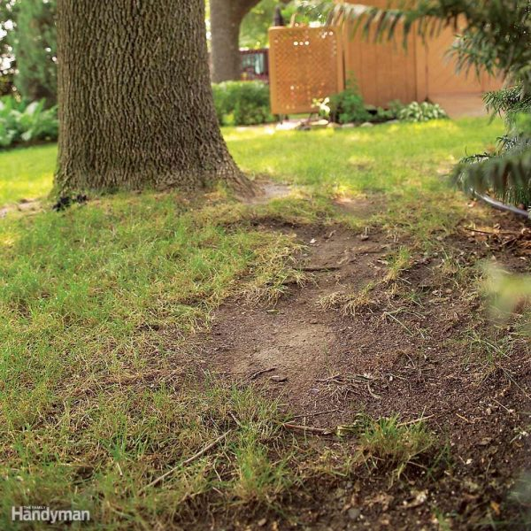 Clever Tips For A Weed Free Yardthe Family Handyman Medium