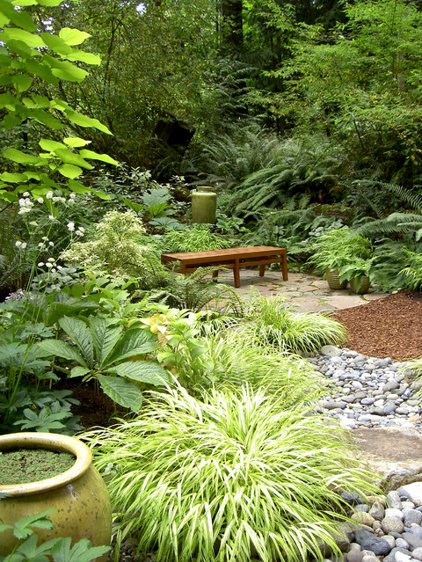 Collection Great Garden Combo 6 Beautiful Plants For A Shady Wet Site Medium