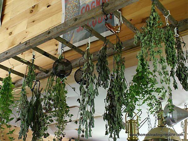 Creative Best 25  Herb Drying Racks Ideas On Herb Rack Medium