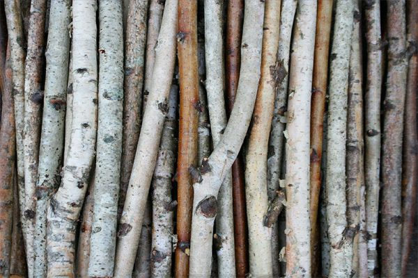 Creative White Birch Branches Birch Wood Logs Paper Birch Sticks Medium