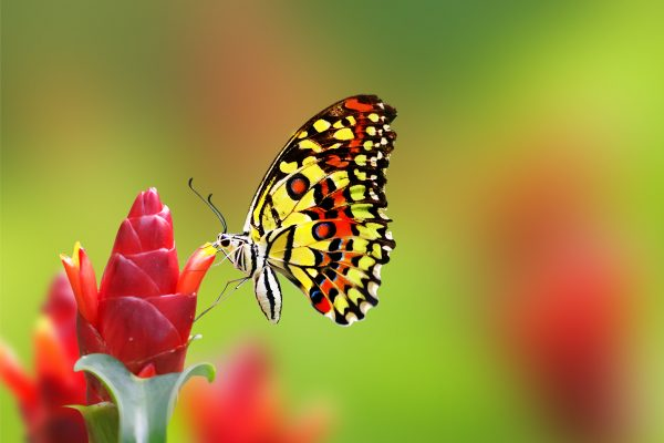 Example Of A Wallpaper Butterfly Flowers 4k Animals  14986 Medium