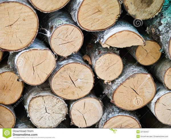 Explore Birch Wood Logs Wallpaper Stock Image Image Of Lying Medium