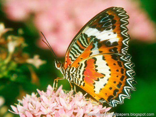 Explore Wallpapers Download Butterfly Desktop Wallpaper Hd Medium