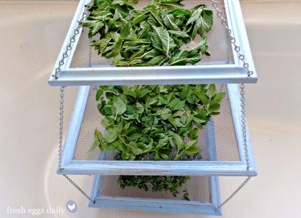 Fresh Diy Tiered Herb Drying Rack Using Repurposed Picture Medium