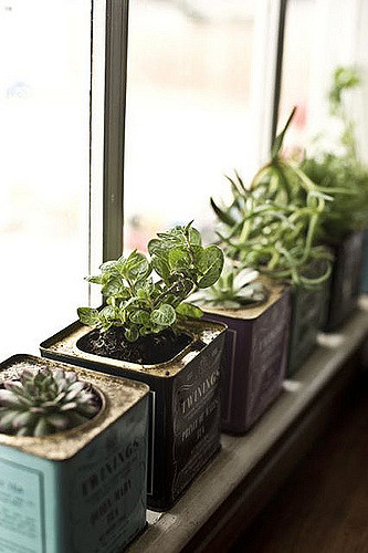 Get Kitchen Window Herb Gardenflickr Photo Sharing Medium