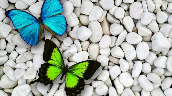 Innovative Butterfly Wallpapers Zyzixun Medium