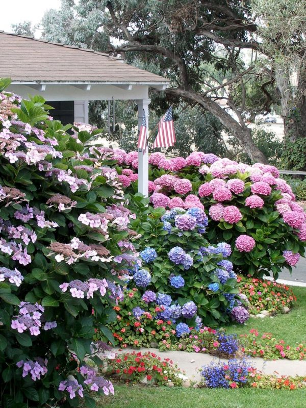 Inspiration Flowering Shrubs For Shade Gardenshgtv Medium