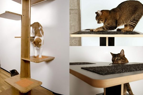 Inspiration Spoil Your Lovely Cats With Contemporary Cat Furniture Medium