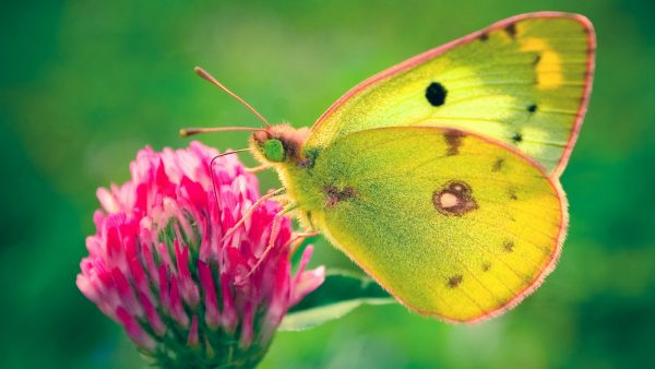 Inspirational Butterfly Desktop Wallpapers   Allfreshwallpaper Medium