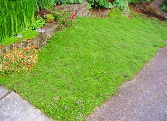 Inspirational Grass Alternatives Outdoor Living Spaces 7 Ideas To Medium