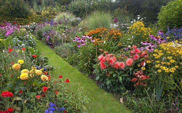 Looking Top 10 Plants For A Modern Cottage Garden David Domoney Medium