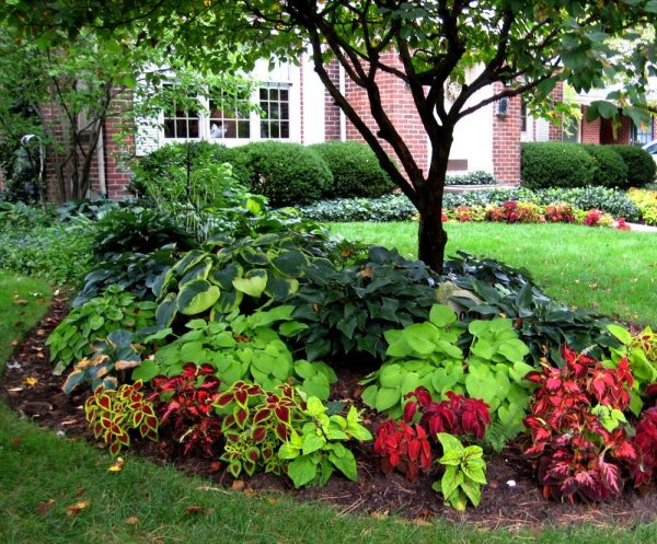 Perfect Small Yard Landscaping Ideas Shaded Area Old Rosedale Medium