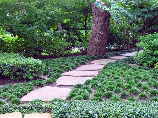 Perfect The Best Outdoor Plants For Shaded Areas Medium