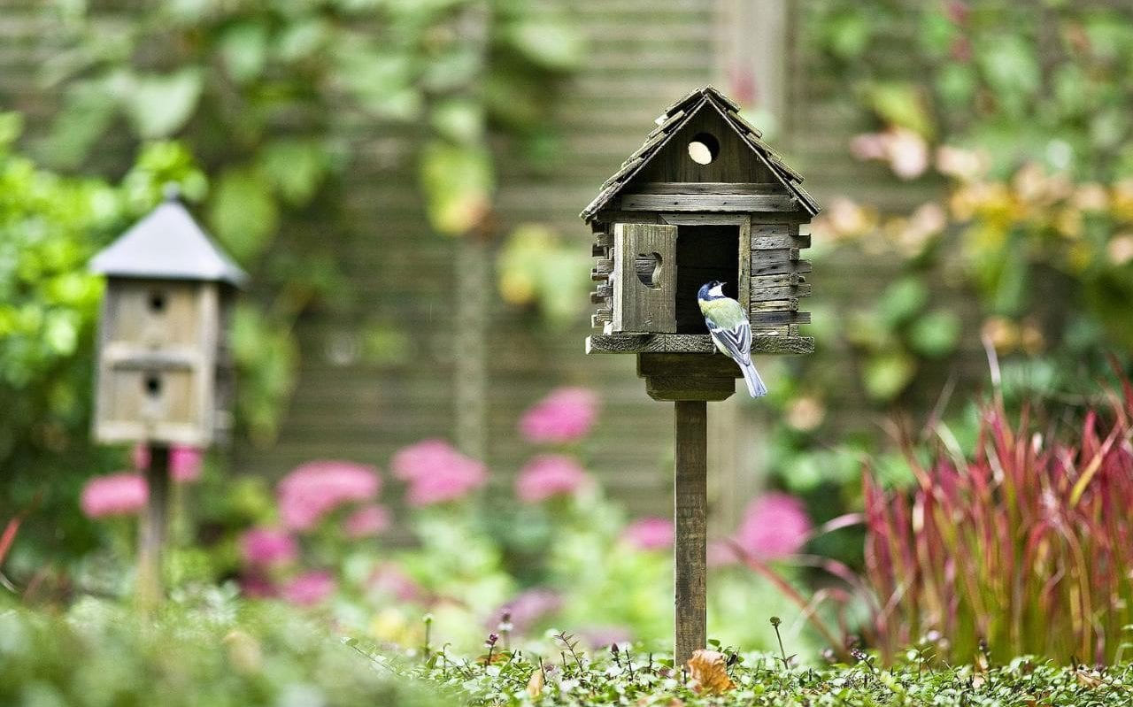 perfect why you need a bird house or two in your garden  and