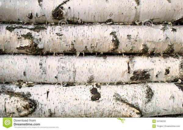 Search Birch Wood Background Stock Photo Image Of Traditional Medium