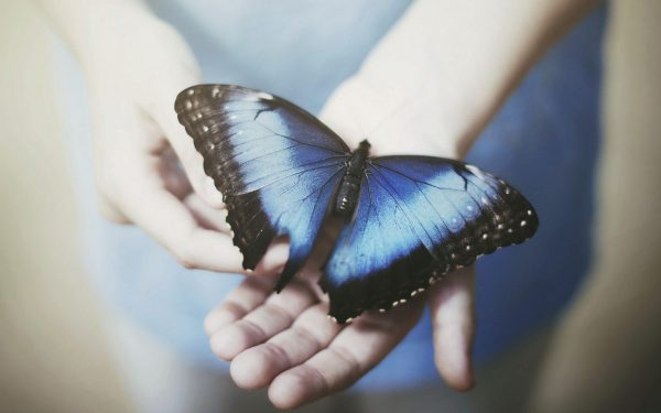Search Blue Butterfly Wallpapers Wallpaper Cave Medium