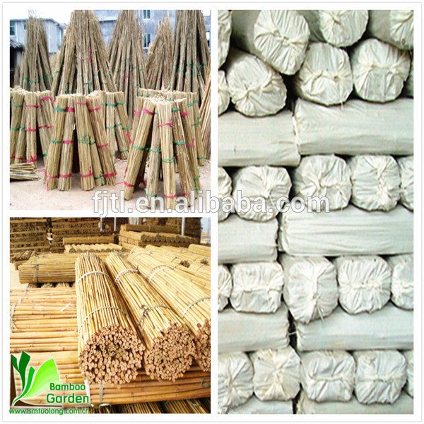 Search Decorating With Bamboo Stalks Wholesale Buy Bamboo Medium