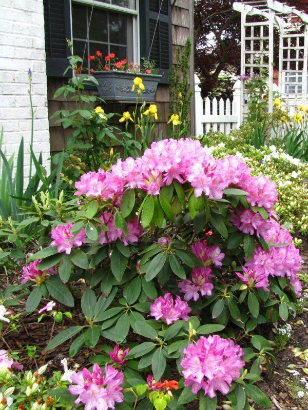 Search Garden Decor Sweet Picture Of The Best Cottage Garden Medium