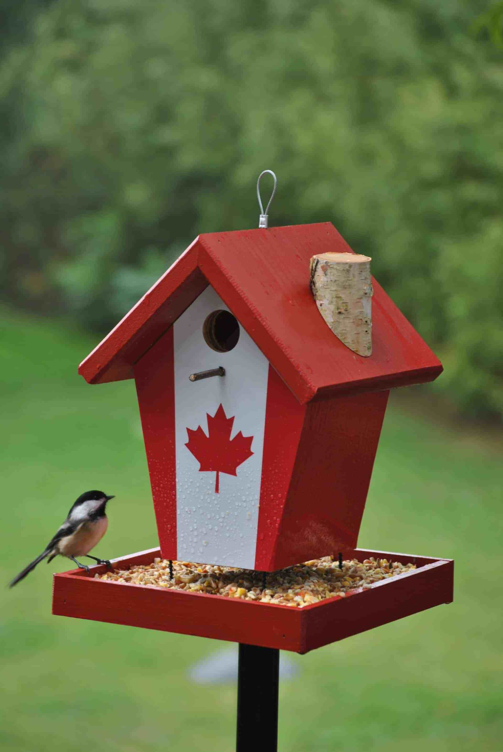 simply canada flag bird feeder  buy a birdhouse