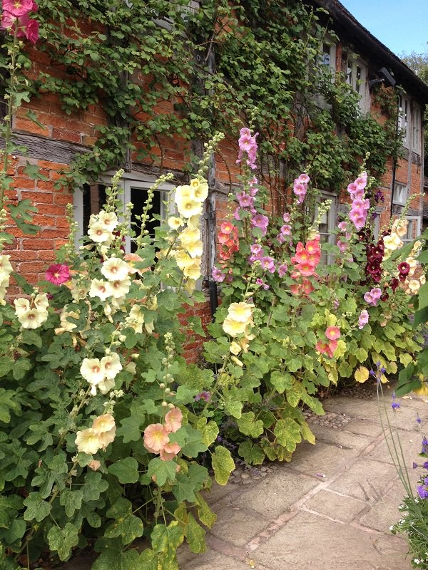 simply the best perennial plants for cottage gardens gardening