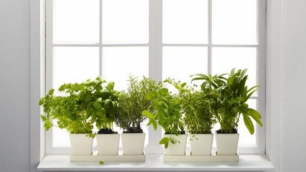 Tips 45 Window Sill Decoration Ideas  Original And Creative Medium