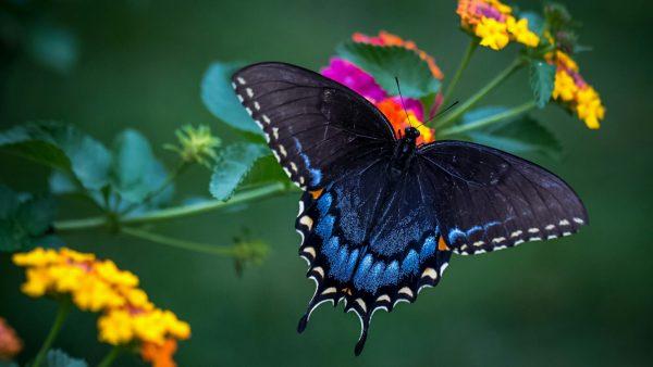 Tips Wonderful Butterfly Macro Photo Hd Wallpaperwallpaper Medium
