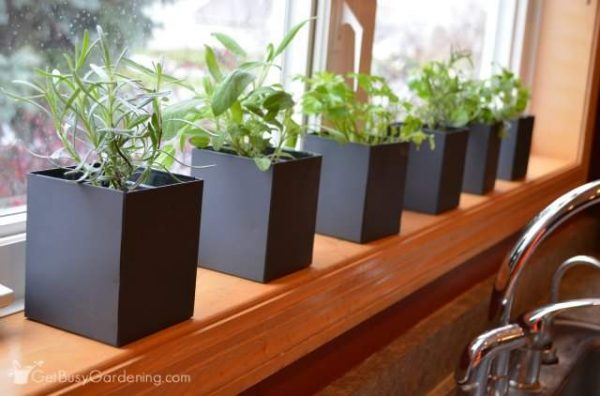 Top Indoor Kitchen Herb Garden Medium