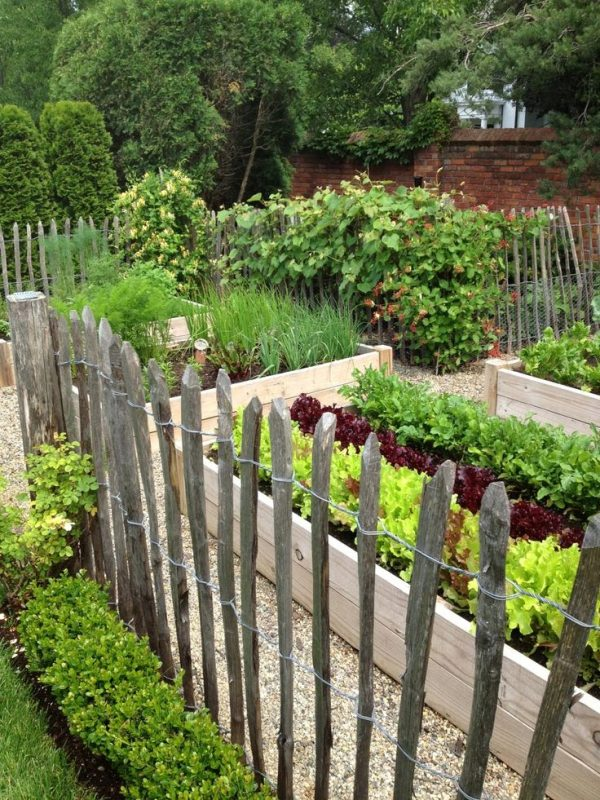We Share Oncedailychic Vegetable Patch Medium