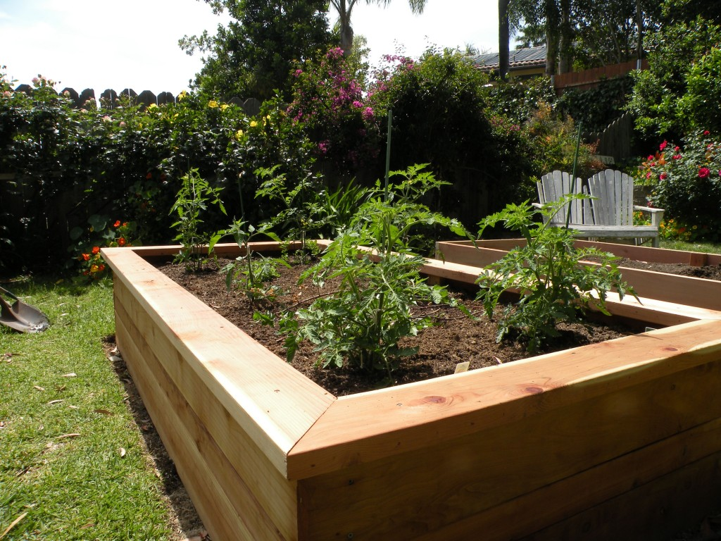 Best Building Vegetable Boxes For A Greek Garden California 25