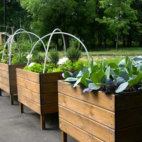 Bore Urban Vegetable Gardening Medium