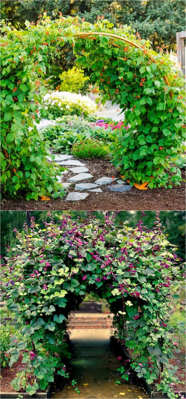 Explore 20  Favorite Flowering Vines And Climbing Plants A Piece Medium