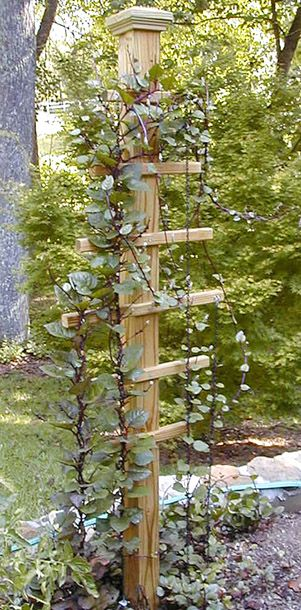 Get A Great Trellis Idea For Climbing Vines  Campinglivez Medium