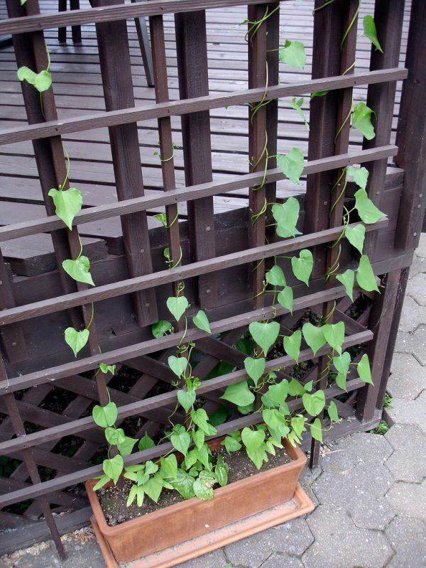 Get Divine Garden Design And Decoration With Various Climbing Medium