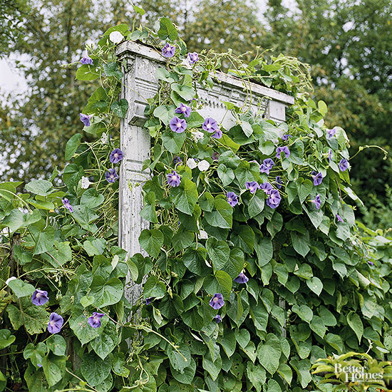 Get Trellises And Vine Supports You Can Build Medium