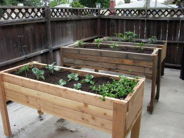 inspiration your victory garden  how you can reduce your food budget