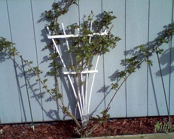 Inspirational Enchanting Garden Design And Decoration Using Small Medium