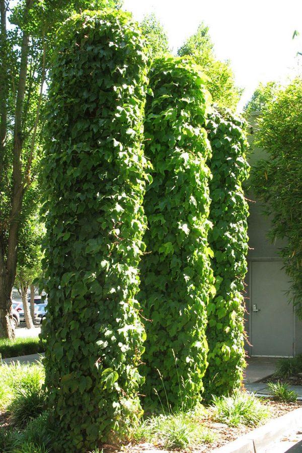 We Share 17 Best Images About Plant Support Obelisk On Medium