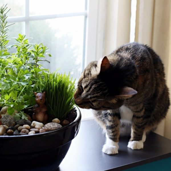 Bore How To Make An Amazing Diy Indoor Cat Gardenthe Anti Medium