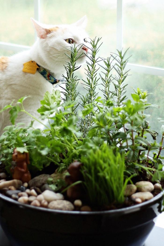 browse how to create an indoor cat garden