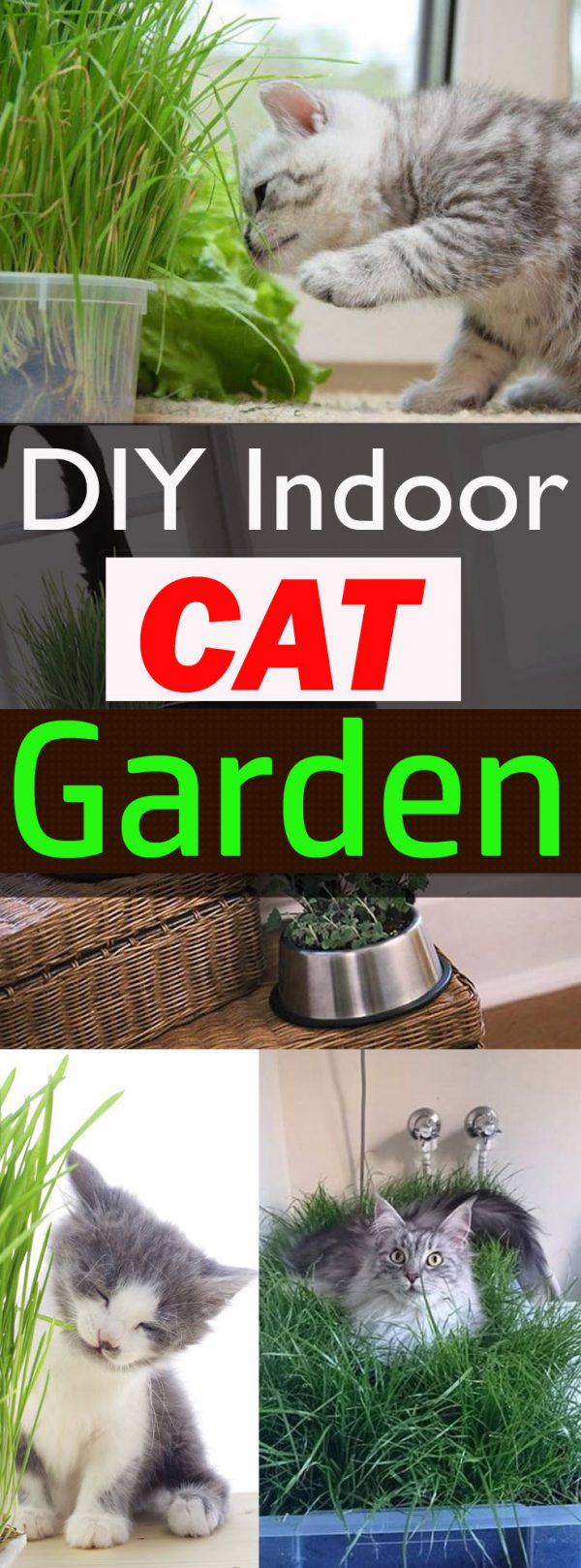 Creative Diy Indoor Cat Garden For Cat Loversbalcony Garden Web Medium